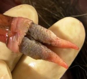 Hazards of fisting vagina