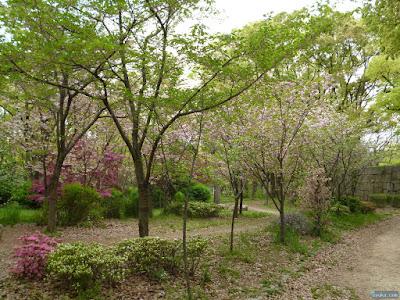 大阪城公園の森