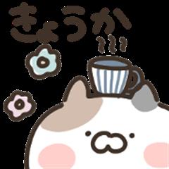 kyoukaneko