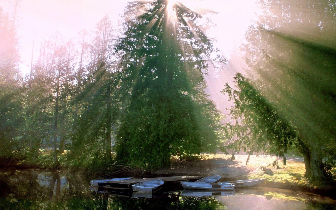 Foto Hutan Terbaru yang Sangat Indah
