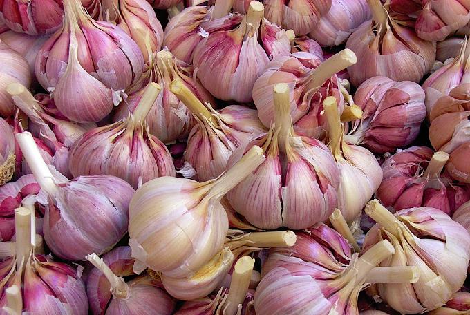 Garlic Farming In Kenya (Everything You Need To Know)
