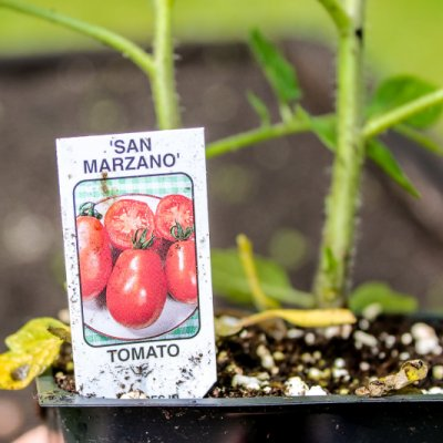 Planting tomatoes in the garden | On The Creek Blog