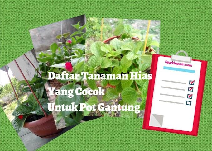 Daftar Tanaman Hias Yang Cocok Untuk Pot Gantung