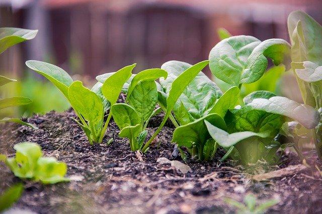 Karangan Singkat Tentang Ide Pokok Gemar Makan Sayur yang Sehat