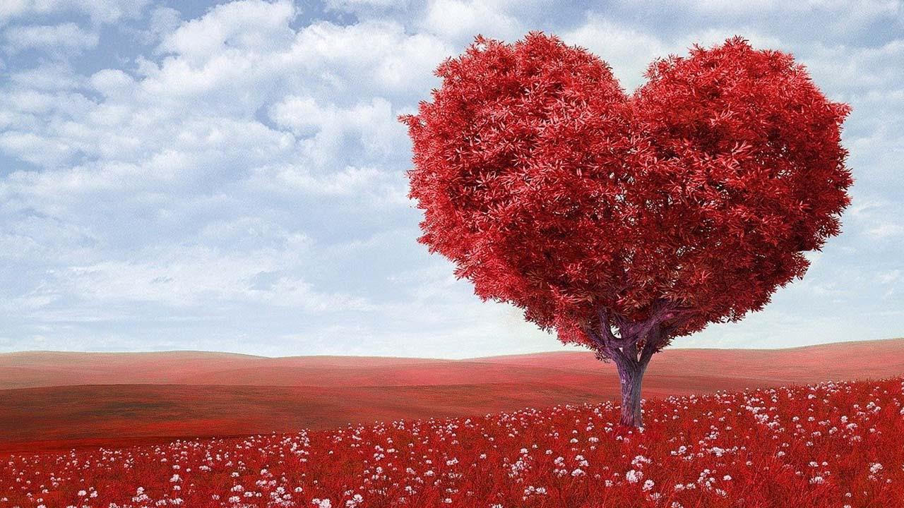 Fakta Unik Tentang Cinta Yang Membuat Takjub Dan Romantis