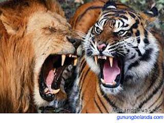 Apakah singa adalah raja hutan?