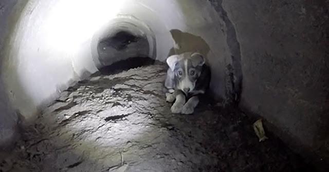 Ребята спасли щенка, который застрял в тоннеле и жалобно звал на помощь