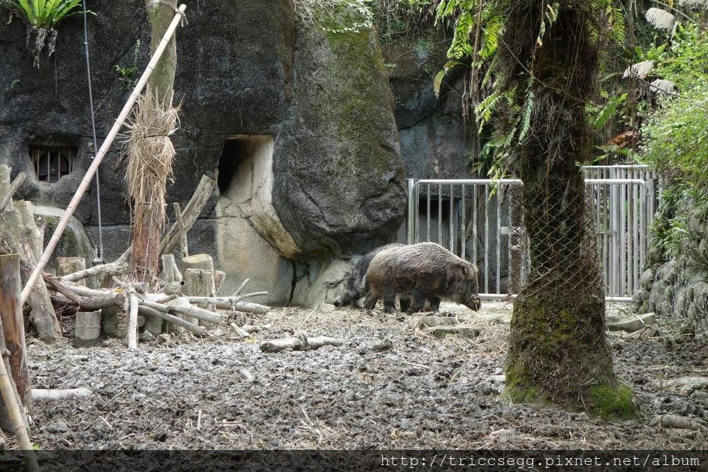 台北動物園(11).jpg
