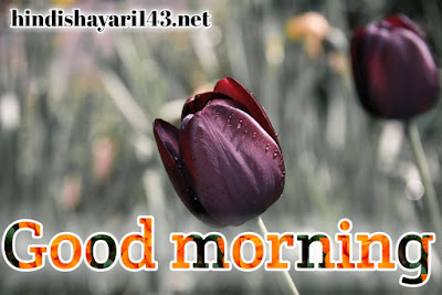 good morning images with flowers HD free download for WhatsApp Facebook