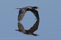 Canon EOS 7D Mark II Birds In Flight Photo Gallery