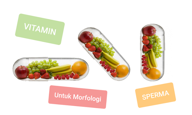 Vitamin untuk memperbaiki morfologi sperma