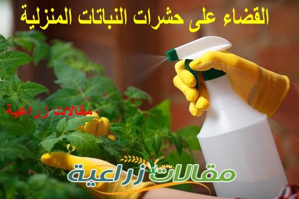 القضاء على حشرات النباتات المنزلية - مقالات زراعية