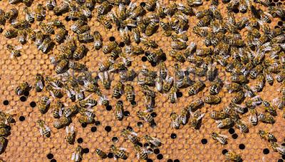 6 Τρόποι ώστε να μπορέσουμε να βελτιώσουμε τις αποδόσεις των μελισσιών μας!
