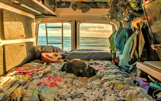 Guy equal Job and Sells Everything He Owns simply to Travel along with his Cat