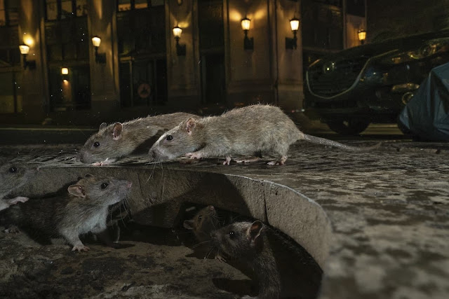 fotografías-ganadoras-Wildlife-Photographer-of-the-Year