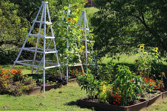 #RaisedBeds #GardenLife #FarmLifestyle #Farm #Plants #Flowers #Plants #GrowYourOwnFood ##Garden #OrganicGardening #GreenThumb #SimpleLiving #Gardening #Gardener #SouthernGarden #Arbors #HobbyFarm #SimpleLife