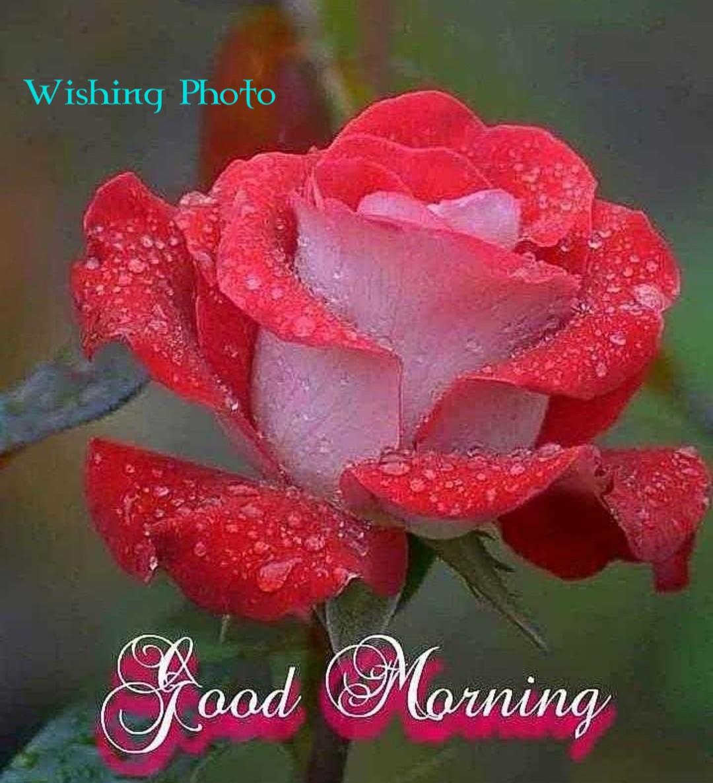 New 631 + Good Morning Image || Good Morning Images Quotes || Good Morning Image For Love || Good Morning Image Download || Good Morning Images For Whatsapp