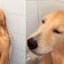 VIRAL! Πώς αντέδρασε ένας αδέσποτος σκύλος στο μπάνιο