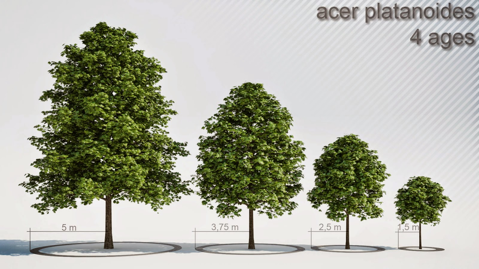 Revit Tree Family Télécharger - sillicalo ga