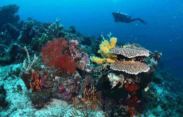 Keindahan bawah laut Pulau Teluk Maumere