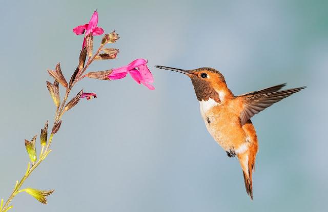 عصافير وورد تاكل من الزهور والورد