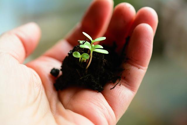 SOIL,PLANT, HAND,TYPES OF SOIL POLLUTION (মাটি দূষণের ধরন),BLACK