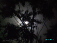"Aspects of the ""strawberry moon"" occurring on the solstice in June, 21, 2016. A little blurred image of the full moon captured through the branches of the tree."