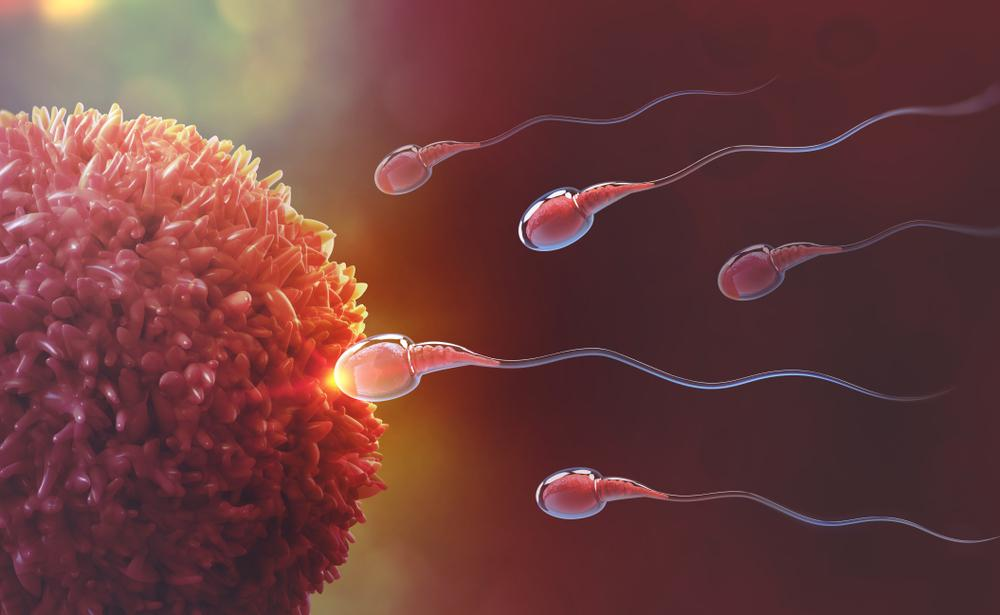 Entendiendo la fertilidad