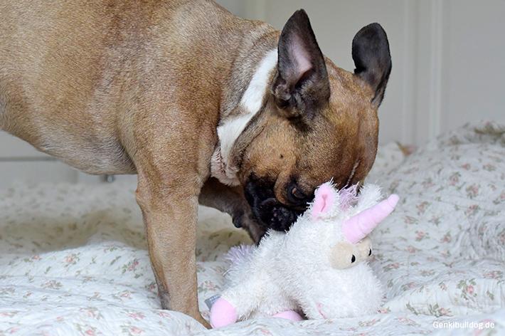 Hundespielzeug Einhorn und Drache
