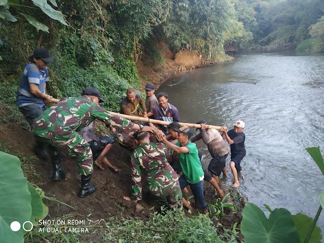 TNI dan Warga di Lumajang Temukan Sapi Tak Bertuan