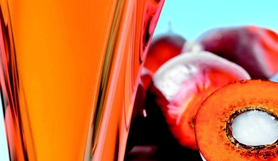 Lo que debes saber del aceite de palma