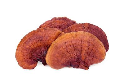 Ganoderma mushroom company in Nagaland