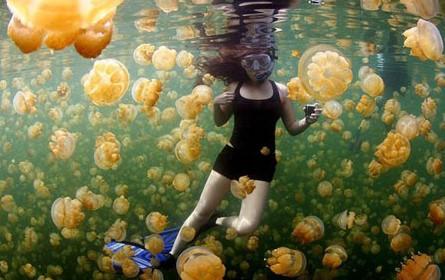 Tempat Wisata Berenang Bersama Ubur-ubur di Indonesia