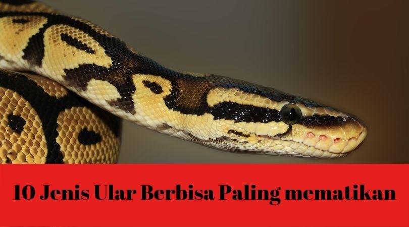 jenis ular berbisa