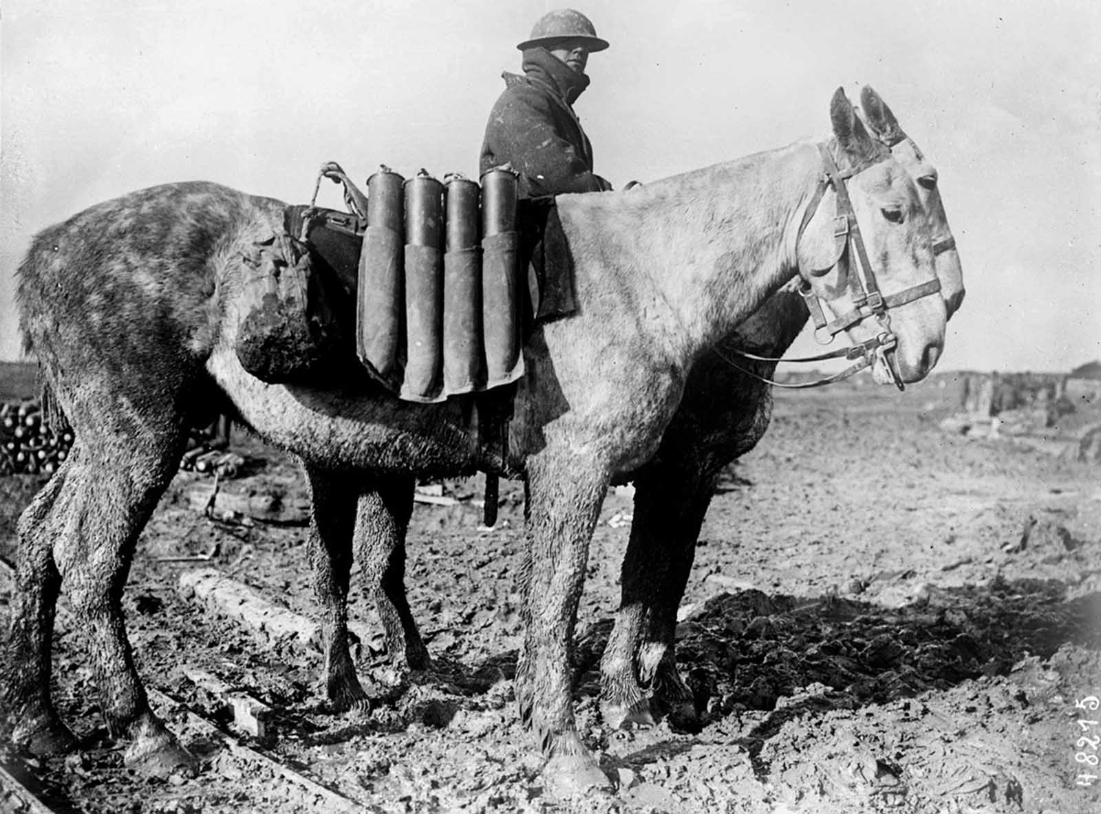Western Front, shells carried on horseback, 1916.