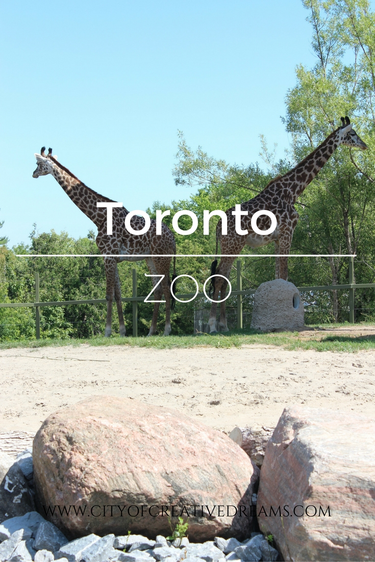 Toronto Zoo | City of Creative Dreams