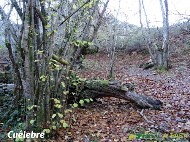 Cuélebre en la ruta de Beyu Pen