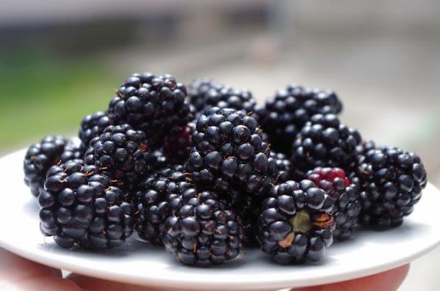 Panduan Cara Menanam Blackberry di Kebun Anda