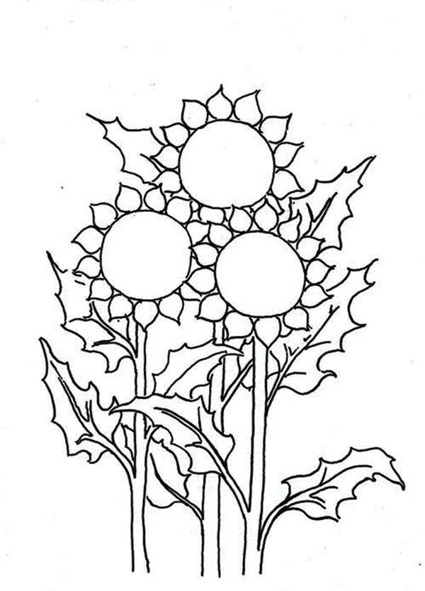 20 Gambar Sketsa Bunga Matahari Untuk Mewarnai Sederhana