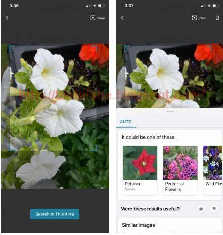 5 Aplikasi Untuk Mengidentifikasi Tanaman Terbaik Untuk Android Dan Iphone Ninna Wiends