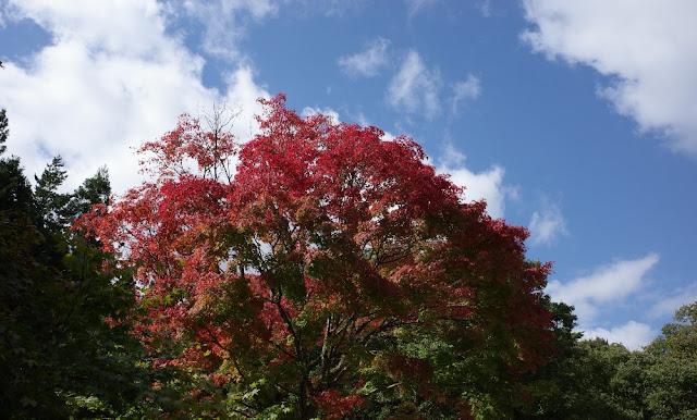 中禅寺湖湖畔の空に映える紅葉