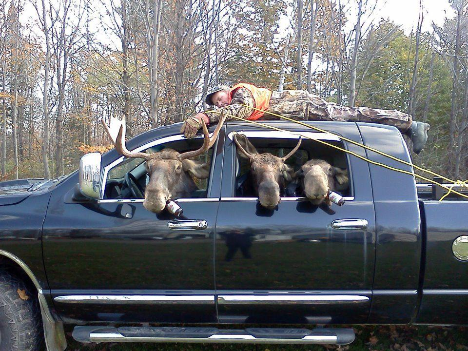 Marians Hunting Stories Etc Etc Etc Moose Hunting