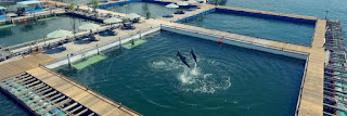 Aktivis Desak KLHK Lepasliarkan Tujuh Ekor Lumba-lumba Dari Penangkaran