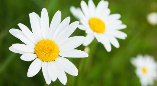 https://paodiario.org/2019/05/15/flores-para-sempre%e2%80%a9/