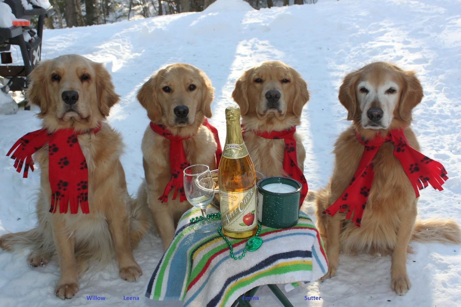 Golden Embers Golden Retrievers Happy New Year 2018 This Year