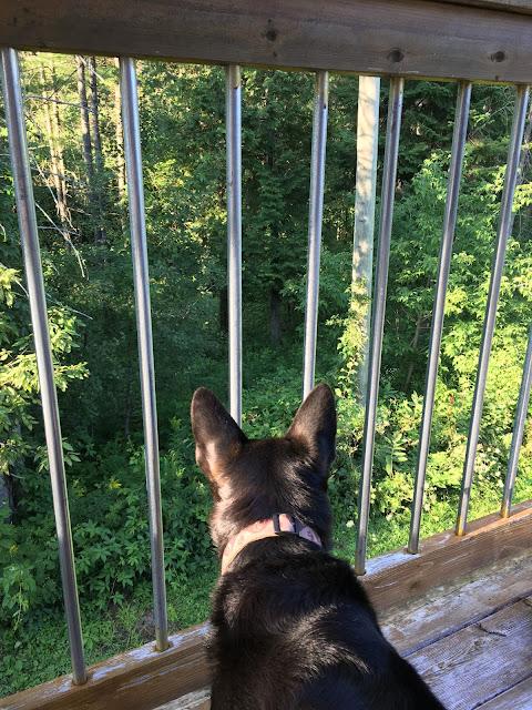 Surveying my kingdom