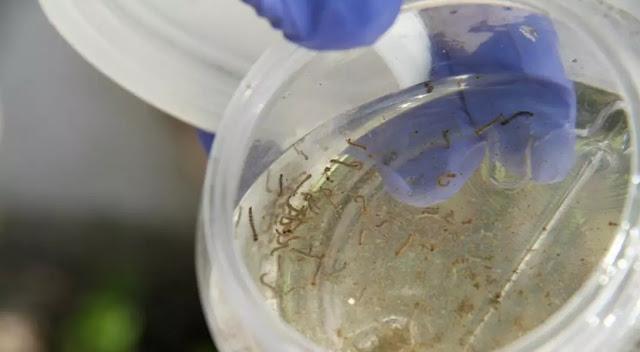 Crisis de servicios y proliferación de zancudos incrementan riesgo de epidemia de dengue