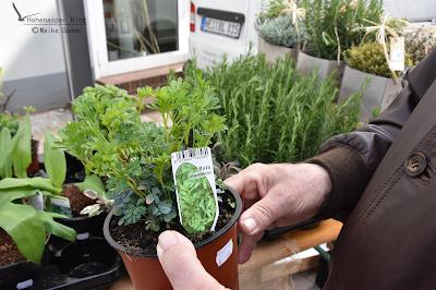 Gewürz und Duftpflanze