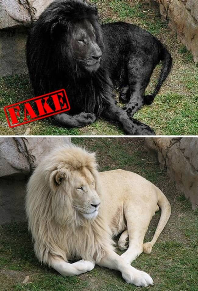 10 Photos That Became Viral But Are Actually Edited - The BLACK BEAST!