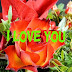 Top 10 I love you Images greeting Pictures,Photos for Whatsapp